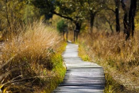 Zwischen Verheißung und Erfüllung – nach Ostern