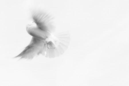 Erfüllung mit dem heiligen Geist